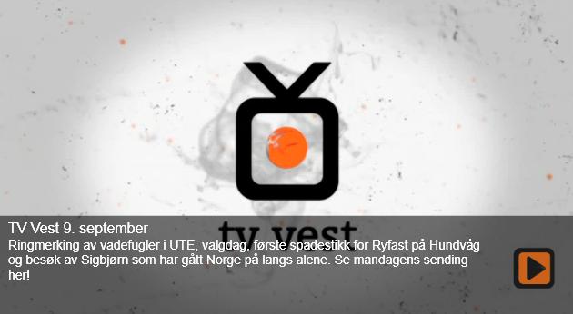 tvvest1